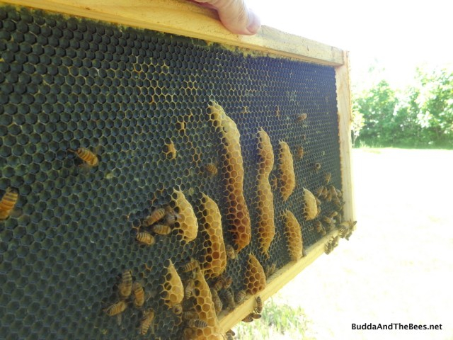 Stupid bees going the wrong way!