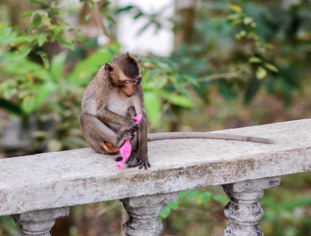 monkey-temple-otres-sihanoukville-cambodia-buddha-drinks-fanta
