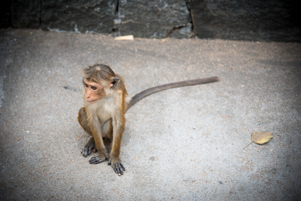 sri-lanka-colombo-lion-rock-wildlife-tourists-travel-sigiriya-monkey-beaches-egg-hoppers-amangalle-amanwalla-tangalle-galle-visa-galle-photography-buddha-drinks-fanta-jenny-adams-1-of-1