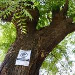 Free Our Trees Campaign Gujarat Environment Festival Ahmedabad Featured