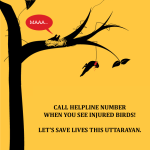Maa - Save Birds Campaign