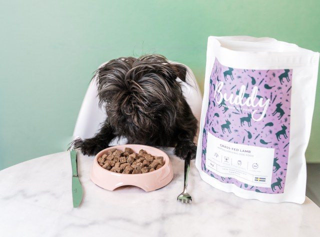Hund äter torrfoder från Buddy Pet Foods