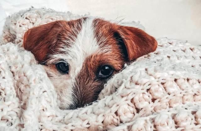Frågestund med hundpsykolgen Rebecka