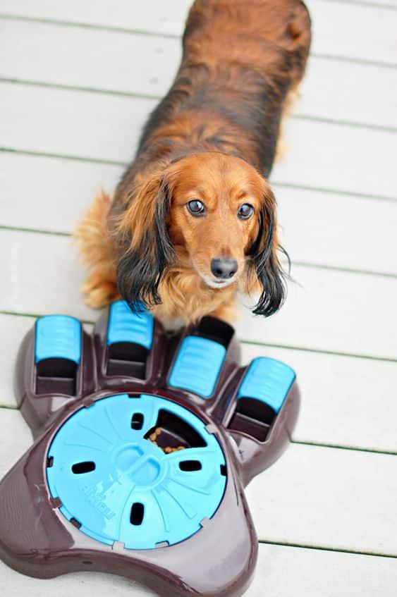 Buddy Pet Foods | 10 julklappstips till din hund | Aktiveringsmatskål hund