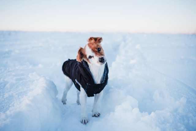 Så vet du om hunden fryser