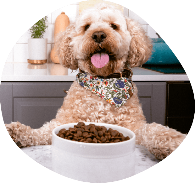 dog-with-a-meal