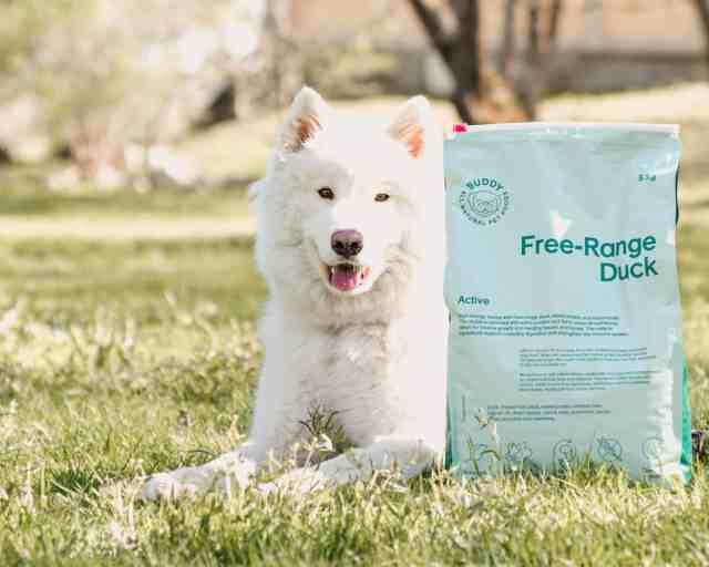 Aktiva hundar och deras näringsbehov
