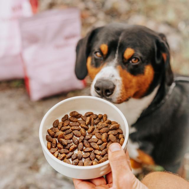 Kräsen hund? Så ökar du hundens aptit!