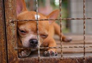 dog-behind-wire