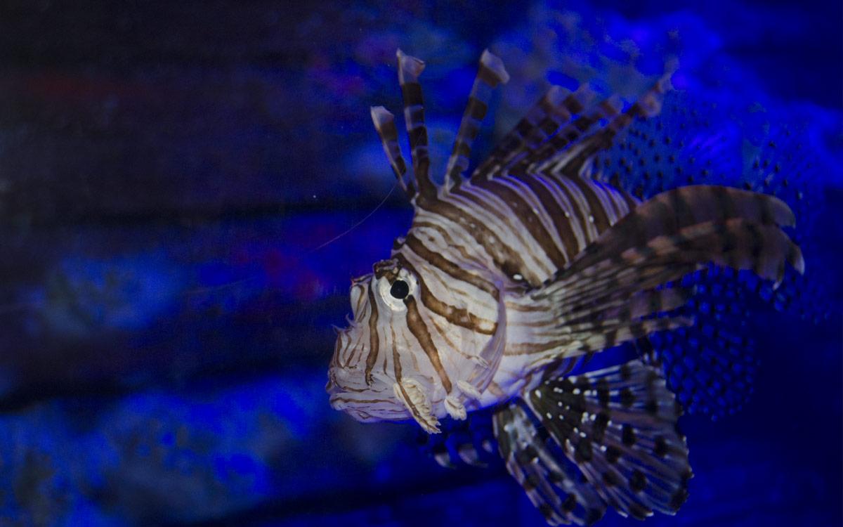 fish at Underwater World