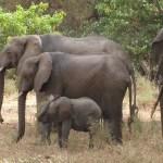 Northern Tanzania 6 Day Budget Safari