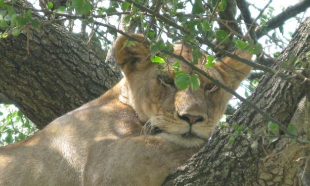 One Day Safari to Manyara National Park