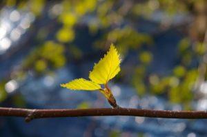 leaf-1359023_640