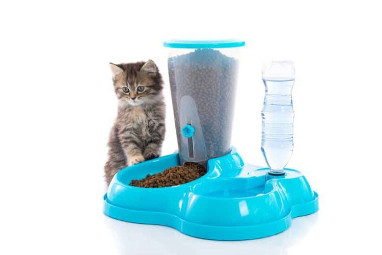 Automatic Cat Feeder Review 2020