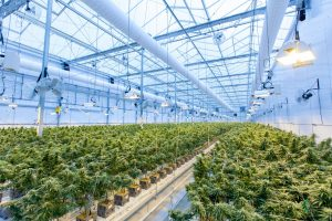 Growhouse management