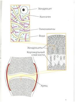//budtezzdorovy.ru/хондропротекторы