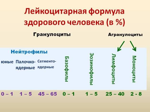 //budtezzdorovy.ru уровень лейкоцитов