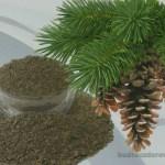 Лигнин: чистим организм природным сорбентом.