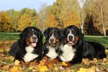 Gira, Cassie, Abigail