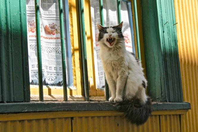 visiter valparaiso chat