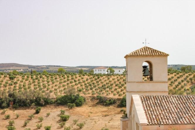 Vue olviers Setenil de las Bodegas andalousie