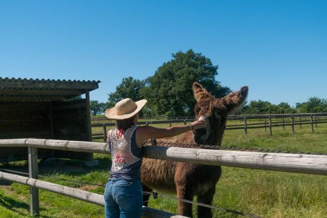 Week end à la campagne dans le Berry pôle du l'âne et du cheval
