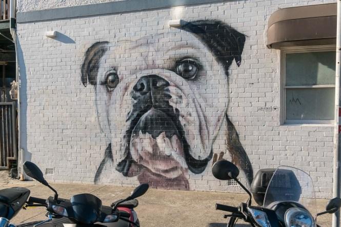 Street Art Bondi beach Coogee to Bondi walk