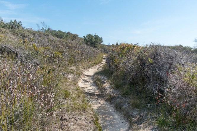 Pinnacles Loop Walking Track bend boyd national park