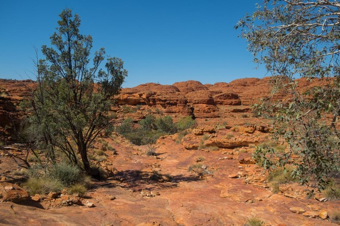 Kings Canyon Rim Walk red centre