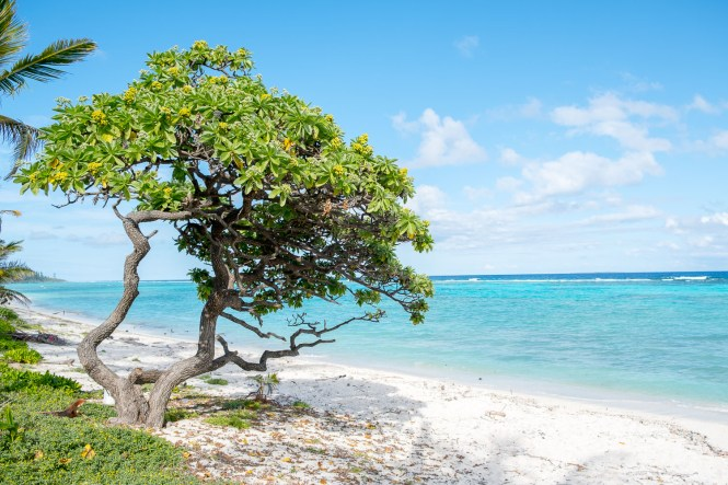Photo-lifou-tamanou-beach