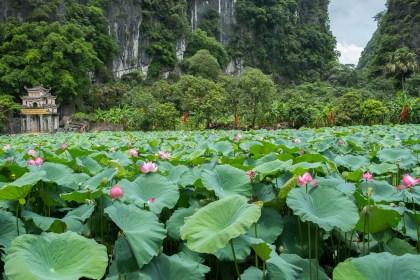 champs de lotus baie d'halong terrestre tam coc