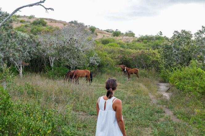 laura-chevaux-sauvages-nouvelle-caledonie-relais-de-poingam