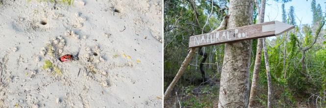 sentier-piscine-naturelle-oro-ile-des-pins-nouvelle-calédonie
