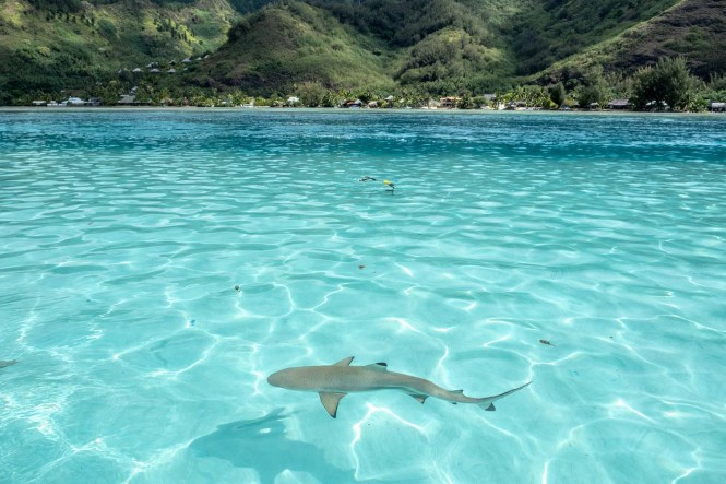 Lagon-avec-raies-requins-moorea