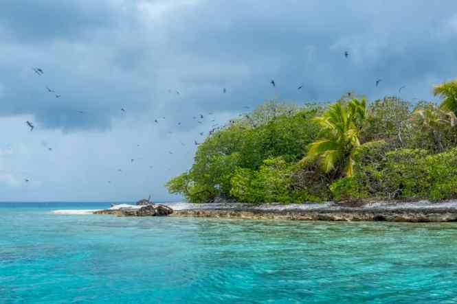 rangiroa-île-aux-oiseaux