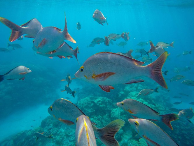 rangiroa-snorkeling