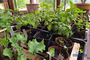 Notfalls dienen Wintergärten auch mal als Anzuchtorte.