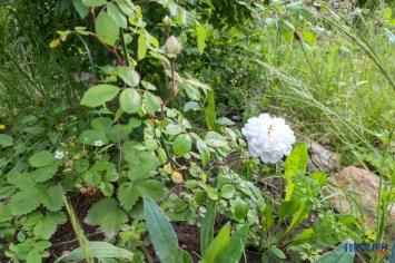 Umgeben von den feinen Blütendüften entspannt es sich nochmal so schön.
