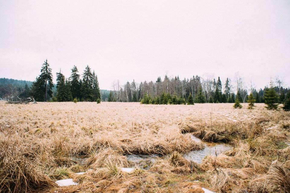 marienbad-hochmoor-landschaft