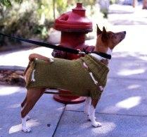dogcoat2