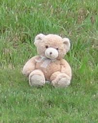 teddy bear in grass