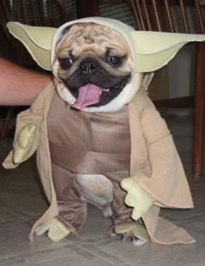 dog costume Yoda