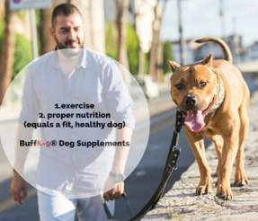 dog muscle supplement exercise for pitbulls vitamins