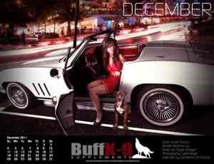 buffk9 classic chevy corvette model girl pitbull health