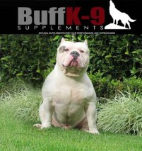 kuwait kingline bullies gotti line buffk9 dog nutrition champion