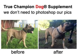 buffk9 dog vitamin supplements before after presa canario pitbull