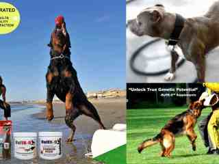 dog muscle vitamin supplements buffk9