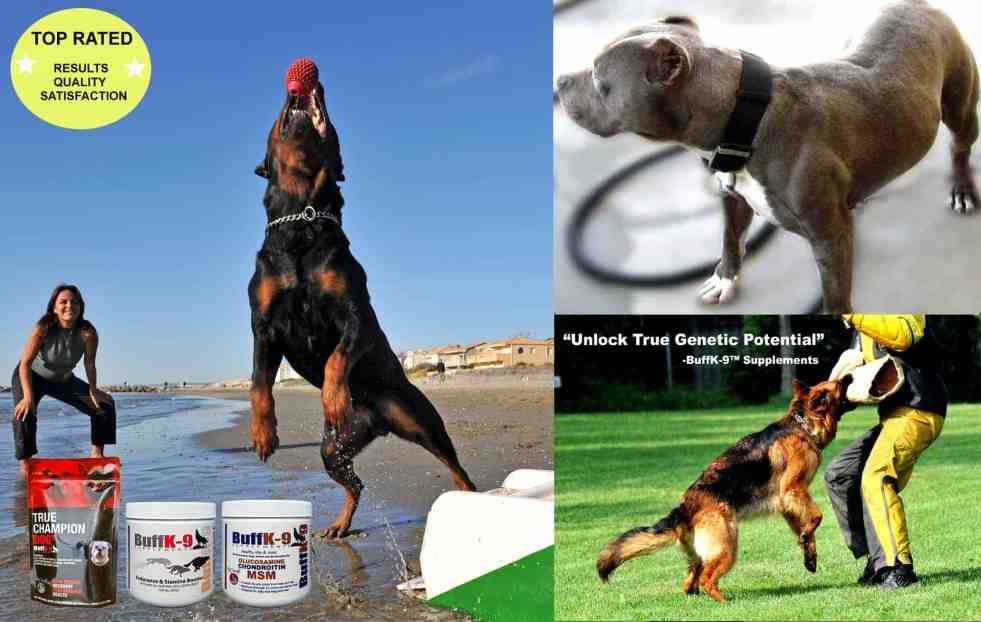 dog muscle vitamin supplements buffk9