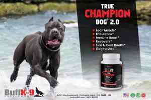 buff k9 true champion dog supplement muscle stress immune health endurance