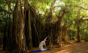 SwaSwara Ayurveda and Yoga on Om Beach_yoga under the banyan tree